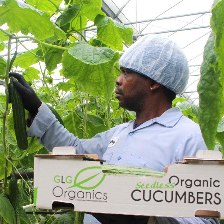 GLG Organics Employee